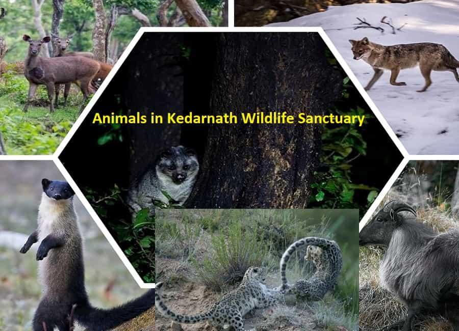 Animals at Kedarnath Wildlife Sanctuary