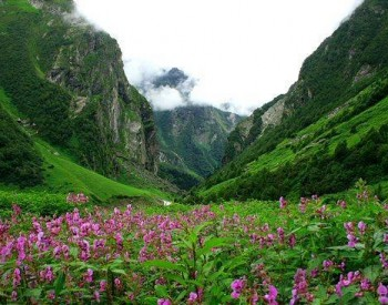 valley of flower national park