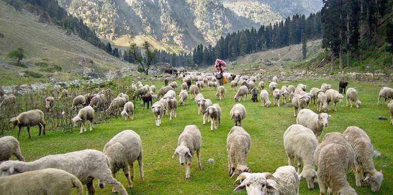Dodital Bamsaru Khal Pass Trek